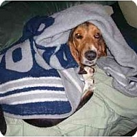 Adopt A Pet :: Ms. Beasley - Phoenix, AZ