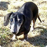 Adopt A Pet :: Gunnar - San Jose, CA