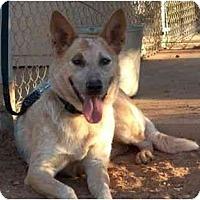 Adopt A Pet :: Luca - Phoenix, AZ
