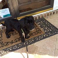 Adopt A Pet :: RAVEN - Raleigh, NC