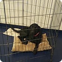 Adopt A Pet :: ROSIE - Gustine, CA