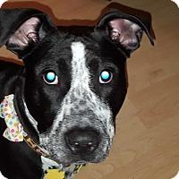 Adopt A Pet :: Addison - Aurora, IL
