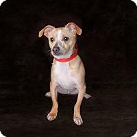Adopt A Pet :: Oakley - Van Nuys, CA