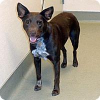 Adopt A Pet :: Emmy - Wildomar, CA