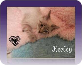 Domestic Mediumhair Kitten for adoption in Mobile, Alabama - Keeyle
