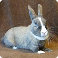 Adopt A Pet :: Dutchess - Los Angeles, CA