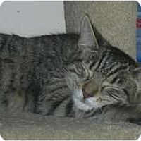 Adopt A Pet :: Haze - Carlisle, PA