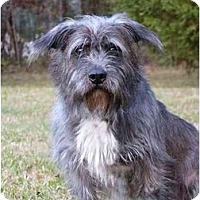 Adopt A Pet :: Roger - Mocksville, NC