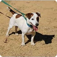 Adopt A Pet :: Ping Pong - West Chester, OH