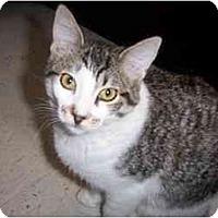 Adopt A Pet :: Dolly - Scottsdale, AZ