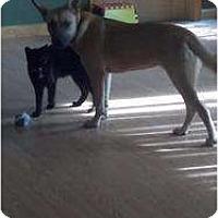 Adopt A Pet :: Minny - Sicklerville, NJ