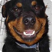 Adopt A Pet :: Tank - Toronto/Etobicoke/GTA, ON