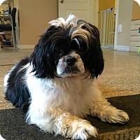 Adopt A Pet :: OREO - Boca Raton, FL