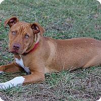 Adopt A Pet :: Finn - Waldorf, MD