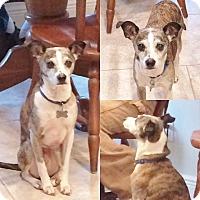 Adopt A Pet :: Max - Courtland, AL