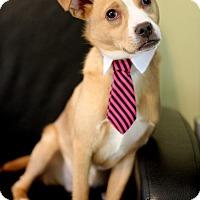 Adopt A Pet :: Newman - Dalton, GA