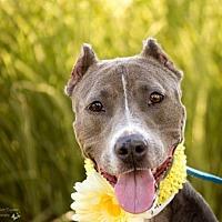 Adopt A Pet :: Jackie - St. Louis, MO
