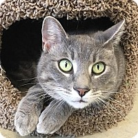 Adopt A Pet :: Doc - Columbia, IL