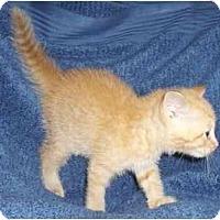 Adopt A Pet :: Dasher - Richmond, VA