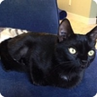 Adopt A Pet :: Magnolia - Vancouver, BC