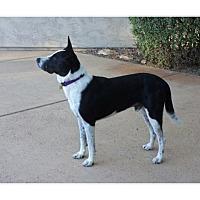Adopt A Pet :: Aces - Tempe, AZ