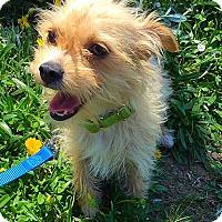 Adopt A Pet :: Mary Ann - Mission Viejo, CA
