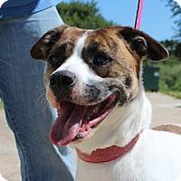 Adopt A Pet :: Layla - Owasso, OK