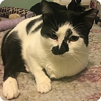 Adopt A Pet :: Elizabeth - Cleveland, OH