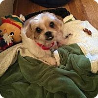 Adopt A Pet :: Ginger - New York, NY