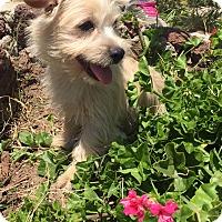 Adopt A Pet :: Estefanos, Marcus) - San Ysidro, CA