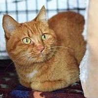 Adopt A Pet :: Myla (and bonded 'sister' Sakira) - Lakewood, CO