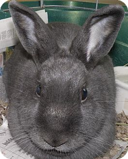 Other/Unknown Mix for adoption in Sterling, Massachusetts - Grey