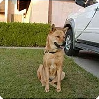 Adopt A Pet :: Mama - Marysville, CA