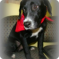 Adopt A Pet :: RIDER - Henderson, KY