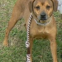 Adopt A Pet :: Sheba - Silver Spring, MD