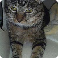 Adopt A Pet :: Tommy - Hamburg, NY