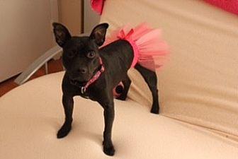 Pit Bull Terrier Mix Dog for adoption in Charlotte, North Carolina - Stella