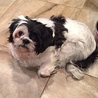 Adopt A Pet :: Roxie - N. Babylon, NY