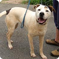Adopt A Pet :: Tonx (60 lb) Close To PERFECT - SUSSEX, NJ