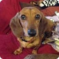 Adopt A Pet :: SPARKLE - Atascadero, CA