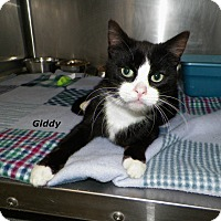 Adopt A Pet :: Giddy - Dover, OH