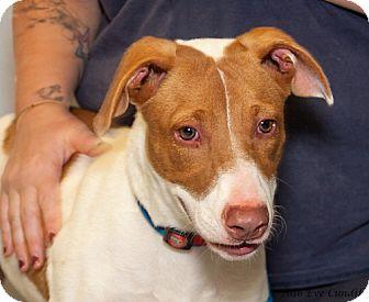 Terrier (Unknown Type, Medium) Mix Dog for adoption in Martinsville, Indiana - Linus