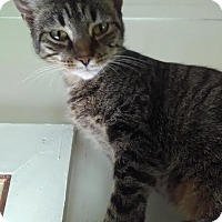 Adopt A Pet :: LILLY! - Owenboro, KY