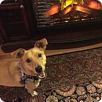 Adopt A Pet :: Jasper - Boston, MA