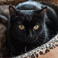 Adopt A Pet :: Reba - St. Paul, MN