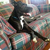 Adopt A Pet :: Freida - Meridian, ID