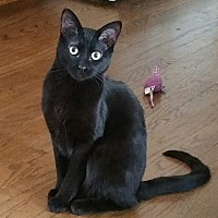 Adopt A Pet :: Squirt - Romeoville, IL