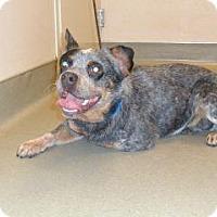 Adopt A Pet :: Carl - Wildomar, CA
