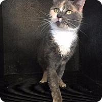 Adopt A Pet :: Krati - Waycross, GA