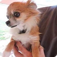 Adopt A Pet :: Sophie - Berwick, PA